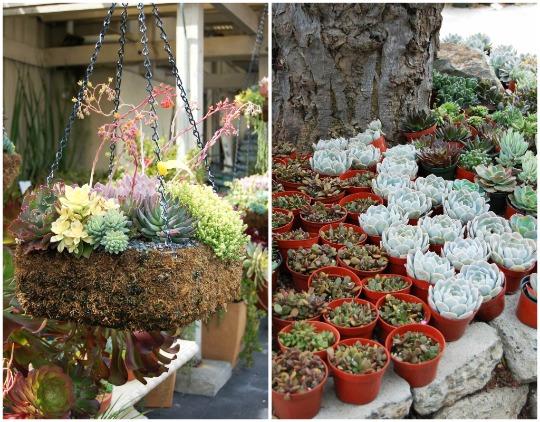 Pin Jardim Flores Suculentas Para Mini Jardim Mini Jardim Como Fazer