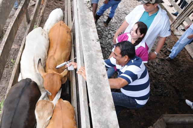 Prefeito Josemar Sobreiro vacina bovino para marcar início da campanha de combate à febre aftosa