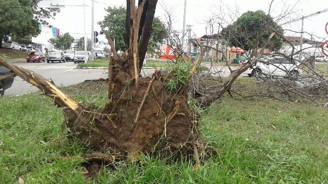 Ventania arrancou árvore pela raiz na Avenida Daniel de La Touche, na Cohama