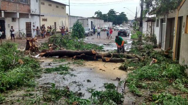 Ventania derrubou árvore, que bloqueou avenida na Cohab