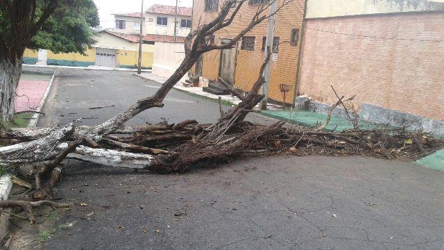 Uma das dezenas de árvores que foram ao chão e bloquearam acesso a via pública