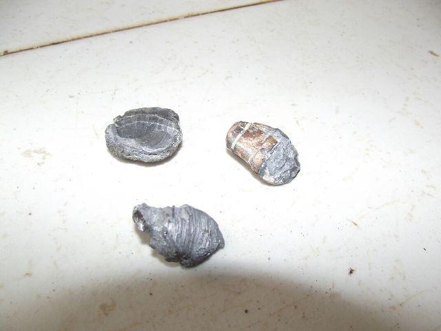 Projéteis foram encontrados no terraço da casa: atentado terias motivação política