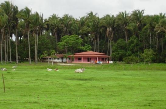 Z fazenda