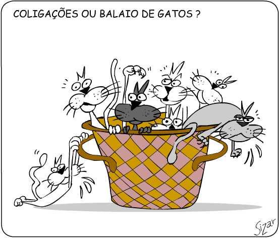 balaio-de-gatos