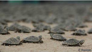 Tartarugas que falam 2